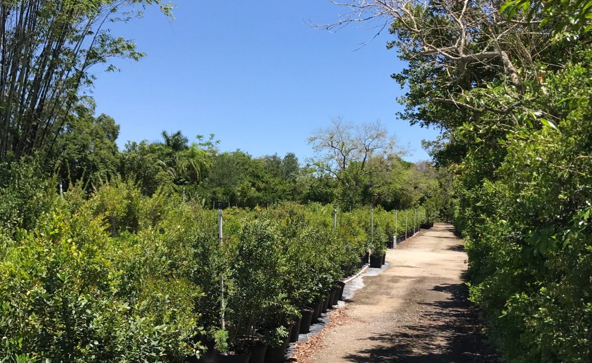 Kelly's Tropical Plants, LLC